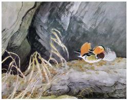 鴛鴦 71.9×90  川合玉堂・画1957年(昭和32)   紙本彩色